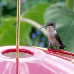 Flight of the Hummingbird: An Environmental Parable