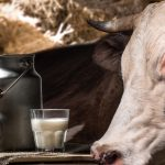 Should You Drink Raw Milk?  Well…. Maybe, Maybe NOT!
