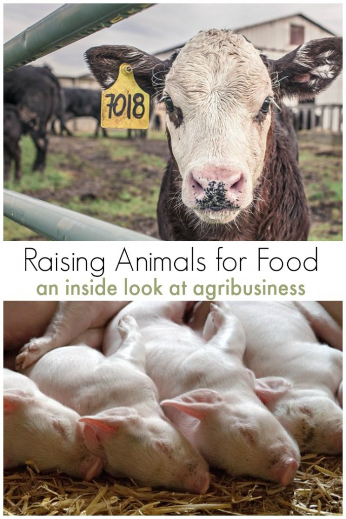 The Dirty Six: Worst Practices in Agribusiness Raising Animals for Food and an Inside Look at Agribusiness