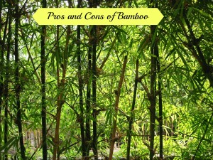 pros and cons of bamboo