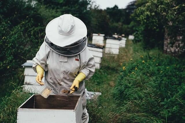 apiary and beekeeping