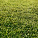Nature Abhors a Monoculture (AKA the %$#! weeds are taking over my grass!)