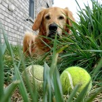 Things I never realized that I could do with a tennis ball!