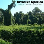 A New Kind of Immigrant and How to Control Invasive Species