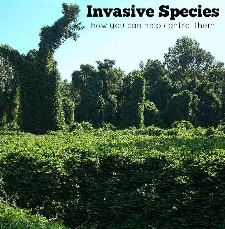 How to Control Invasive Species
