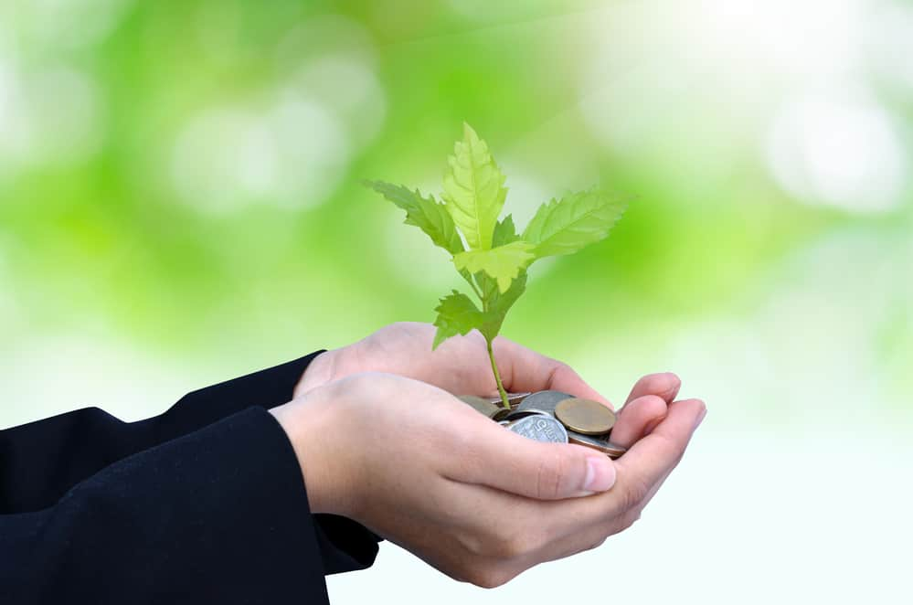 money and plant in hand indicating environmental charity donatio