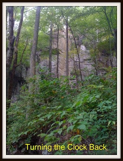 a view of a rock cliff in North Georgia mountains