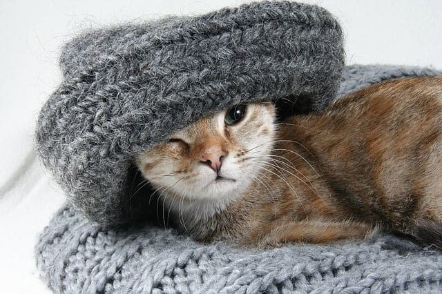 cat with warm hat on