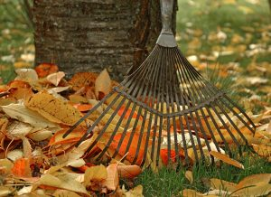 fall leaves and a rake in a backyard lawn