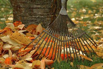fall leaves and a rake in a backyard lawn