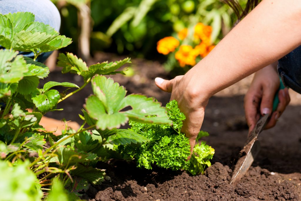 Mental Health Benefits Gardening Can playing in the dirt really make a girl happy
