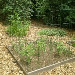 Tips for Keeping Animals Out of Your Vegetable Garden #SCJGreenerChoices