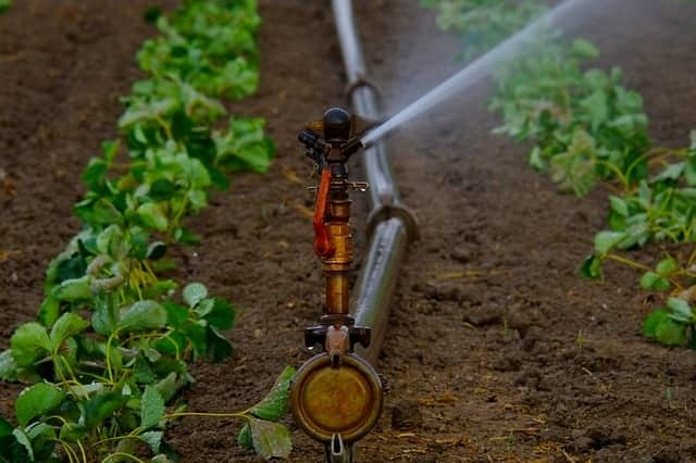 water usage in in the garden with drip irrigation
