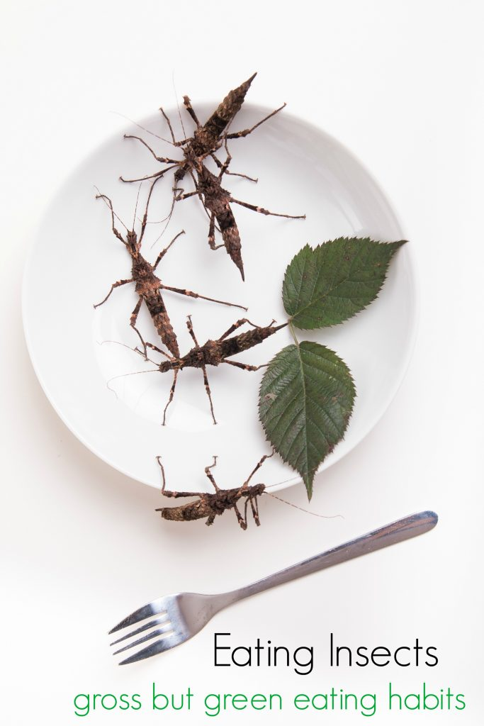 Eating Insects for Food: A Gross but Green Eating Habit
