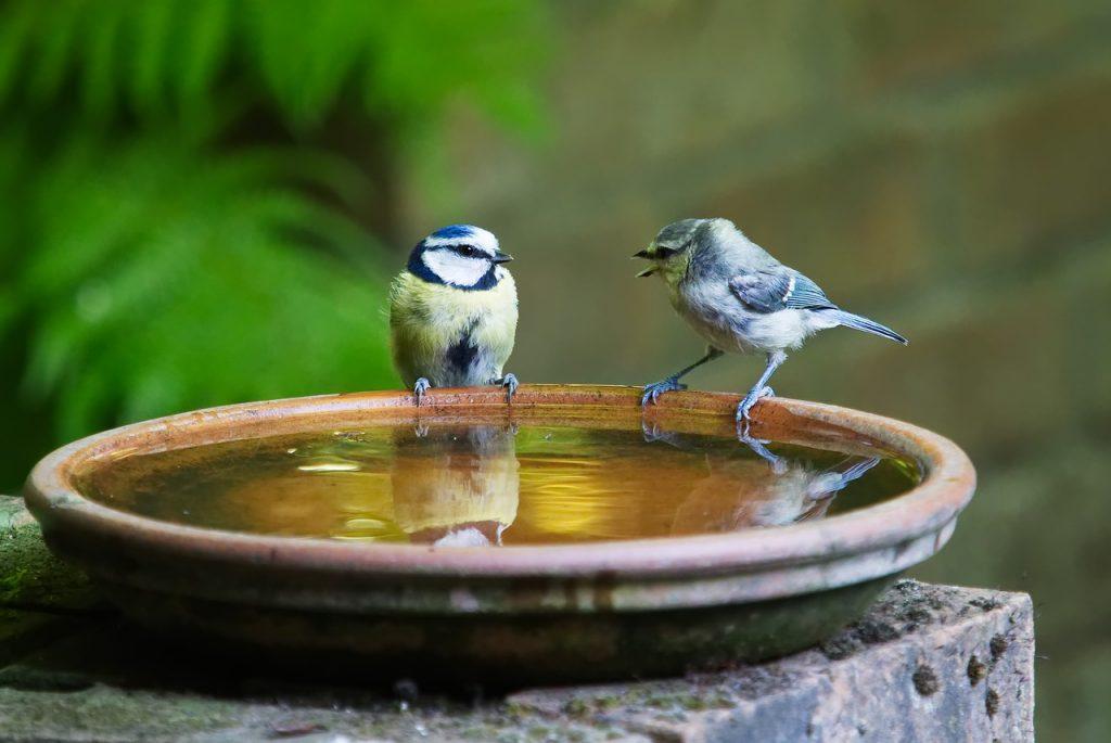 two birds on shallow bird bath on patio