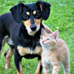 Best Pet Care Tips for Eco Friendly Pet Owners