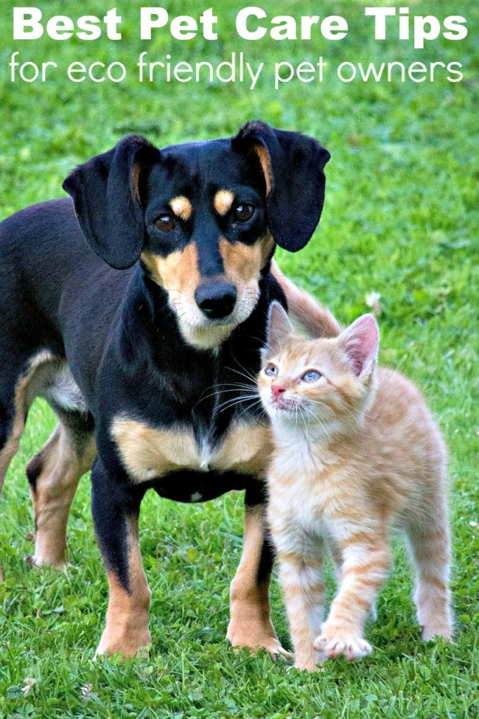 Best Pet Care Tips for for Eco Friendly Pet Owners