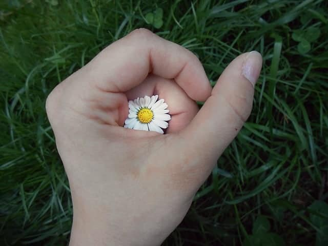 hand with natural nails holding a daisy