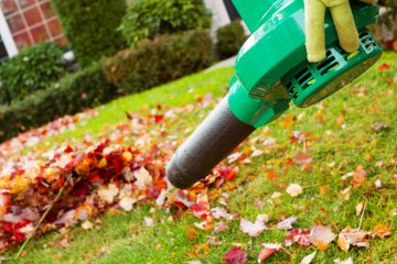 The Leaf Blower: A lazy person's lawn manicure