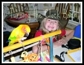 Exotic Pet sun conure
