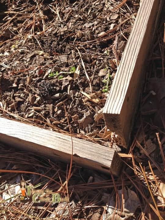 gardening tips repairing the beds