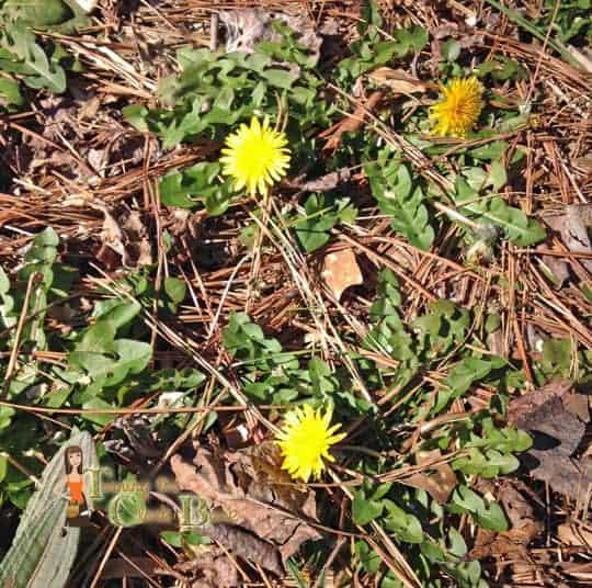 spring gardening tips weeds