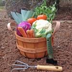 10 Essential Gardening Supplies for Home Gardeners