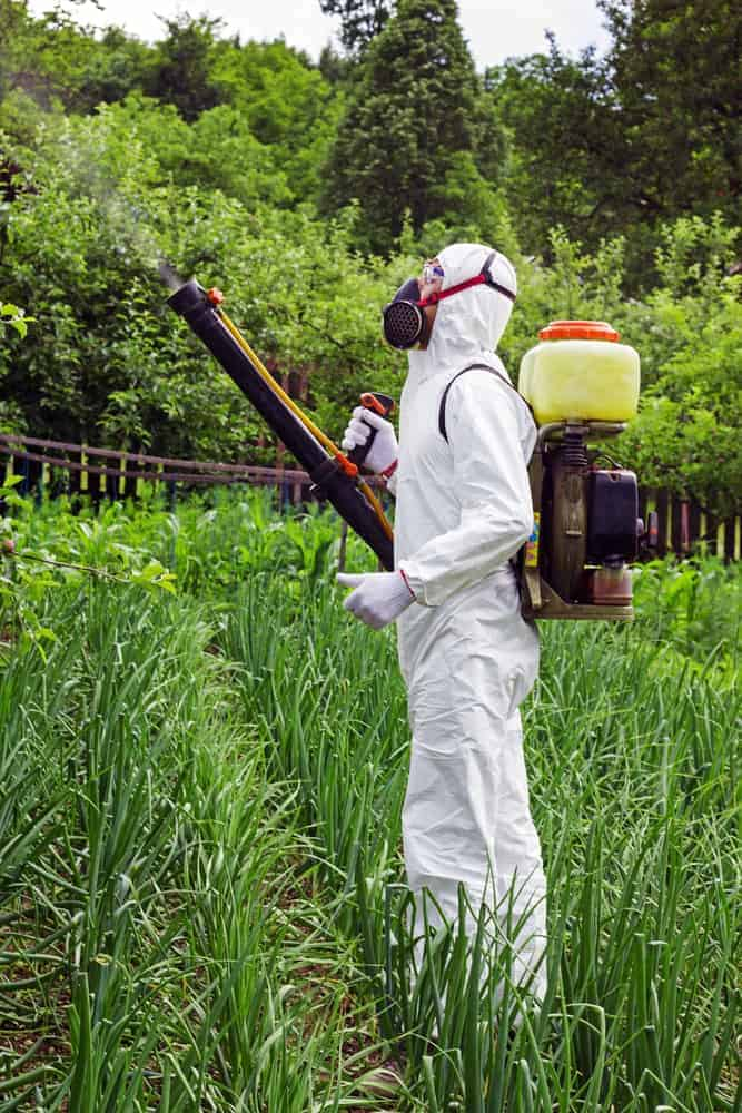 Man in full protective clothing spraying chemicals in the garden/orchard