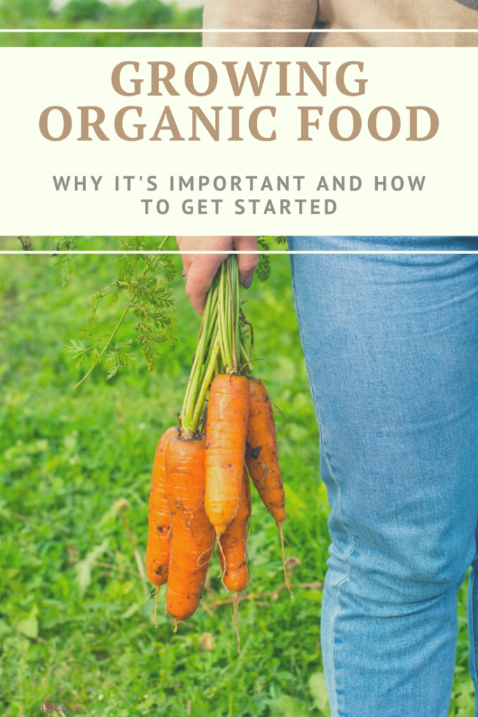 How to Grow organic food: why it's important and how to get started