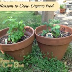 growing organic food in pots