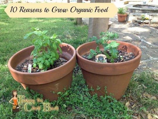 growing organic food in pots