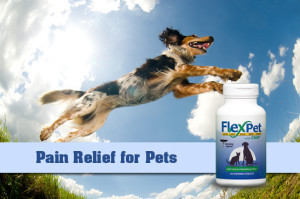 flexpet joint-pain-relief-for-dogs