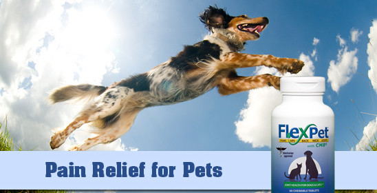 FlexPet Helps Your Pet Stay Active Naturally