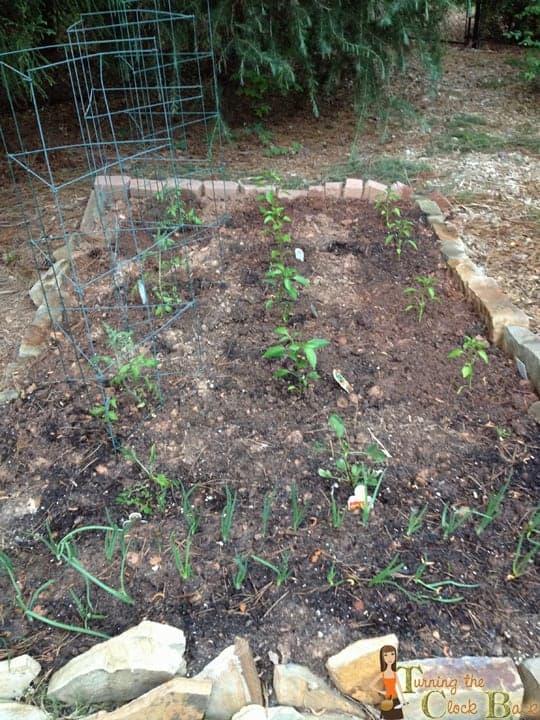 organic food gardening