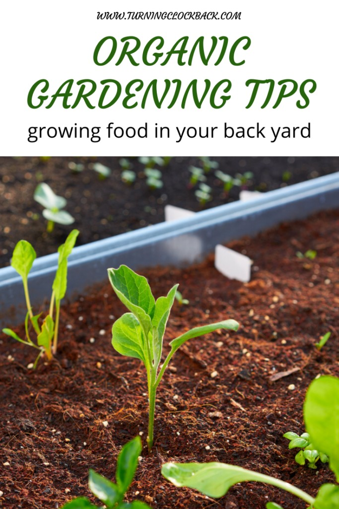 Young plants in the garden with text Organic Gardening Tips and growing food in your back yard