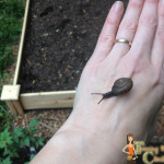 organic gardening help