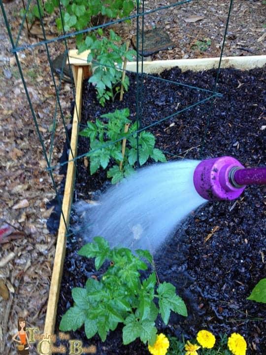 watering your organic garden
