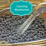 preserving blueberries washing with banner