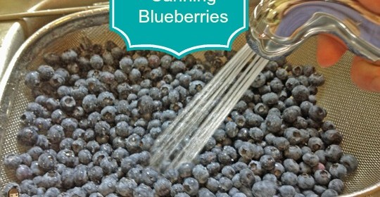 Preserving Blueberries:  My First Attempt at Canning! #sponsored