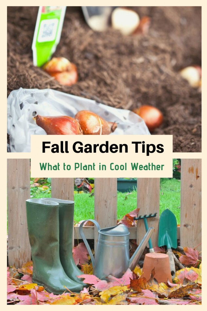 Fall Garden Tips and What to Plant in Cool Weather