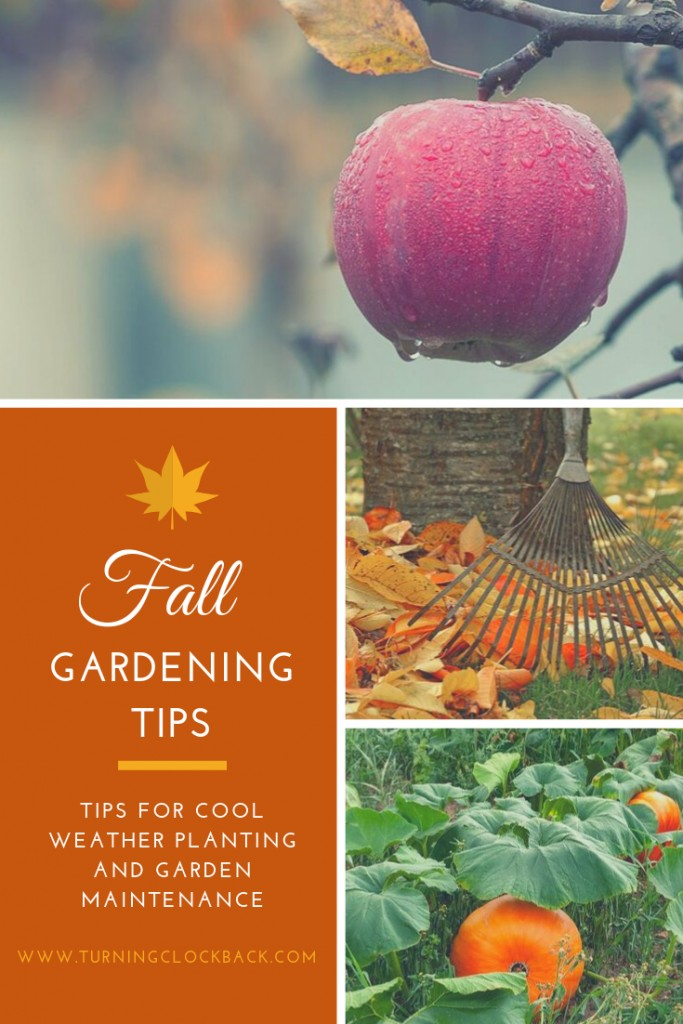 Fall garden produce and fallen leaves with text