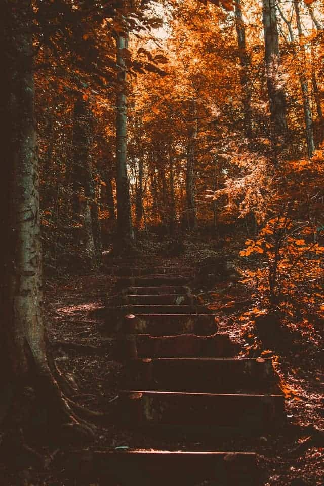 trees in the woods with wooden steps and showing signs of autumn arriving