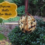 Attract Birds to your Yard with Popcorn Balls!