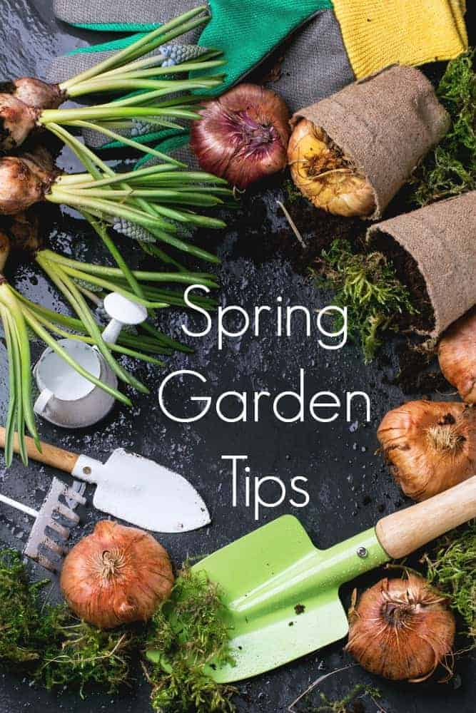 Spring Garden Tips for a Successful and Productive Spring Garden!
