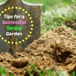 Tips for a Healthy and Productive Spring Garden