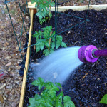 Sponsored: Tips to Conserve Water in the Garden and a Silk #YayWater Message