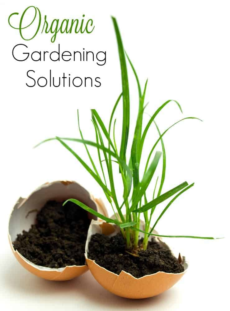 Cheap and Natural Organic Gardening Solutions for Frugal Gardening!