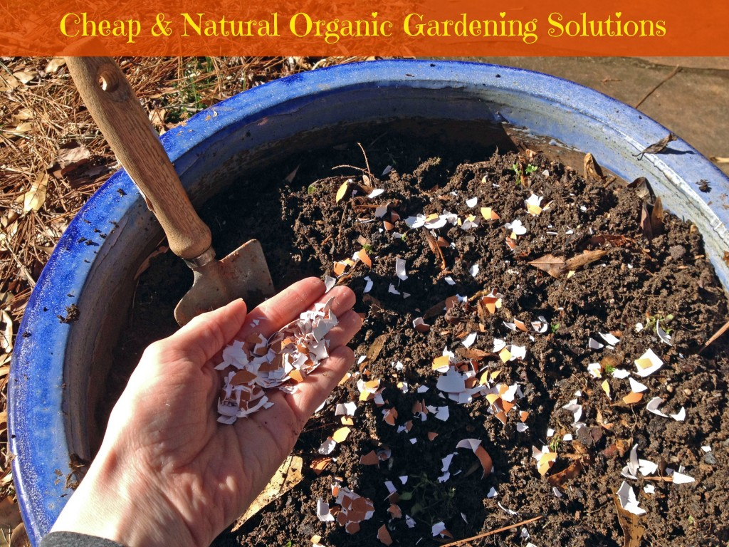 Cheap and Natural Organic Gardening Solutions