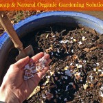 5 Cheap and Natural Organic Gardening Solutions