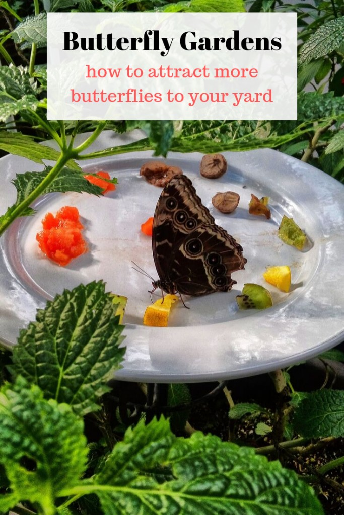 butterfly in garden on dish with fruit